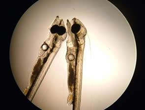 Microscope -bars