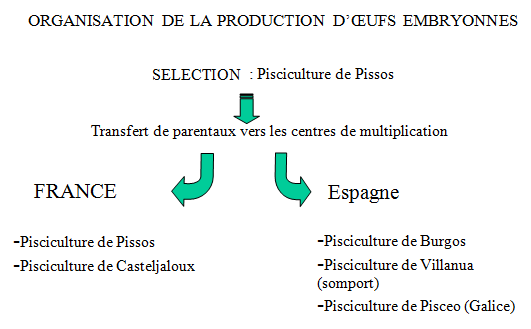 Organisation -production -oeufs